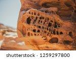 wadi watir  sinai   egypt   may ... | Shutterstock . vector #1259297800