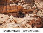 wadi watir  sinai   egypt   may ... | Shutterstock . vector #1259297803