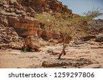 wadi watir  sinai   egypt   may ... | Shutterstock . vector #1259297806