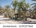 wadi watir  sinai   egypt   may ... | Shutterstock . vector #1259297860