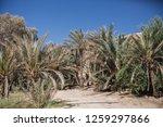 wadi watir  sinai   egypt   may ... | Shutterstock . vector #1259297866