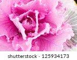 fauna   flora arrow flora... | Shutterstock . vector #125934173
