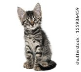 Stock photo gray striped kitten with a surprised grimace isolated white 125936459