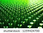 glass bottle texture. glass... | Shutterstock . vector #1259424700