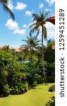 tropical  garden background.... | Shutterstock . vector #1259451289