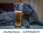 The Cat Lies With A Glass Of...