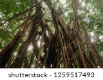 deep tropical jungles with... | Shutterstock . vector #1259517493