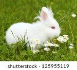 Stock photo cute white dwarf bunny 125955119