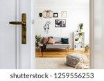 white door of bright living... | Shutterstock . vector #1259556253