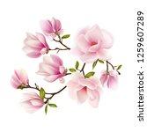 magnolia. beautiful. gentle.... | Shutterstock .eps vector #1259607289