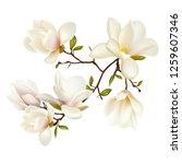 magnolia. beautiful. gentle.... | Shutterstock .eps vector #1259607346