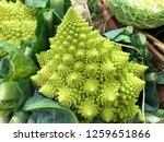 romanesco cabbage in the market   Shutterstock . vector #1259651866