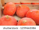 orange squashes in the box | Shutterstock . vector #1259663386