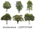 Tree Dicut Isolated White Background - Fine Art prints
