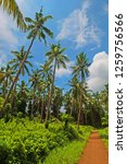 a beautiful and lush palm grove ... | Shutterstock . vector #1259756566