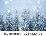 frozen fabulous spruces on a... | Shutterstock . vector #1259820406