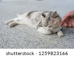 touch a sleeping cat lying on... | Shutterstock . vector #1259823166