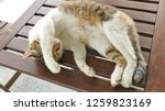 sleeping cat lying on wooden... | Shutterstock . vector #1259823169