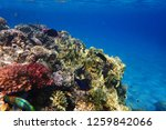 coral reef in egypt as nice... | Shutterstock . vector #1259842066