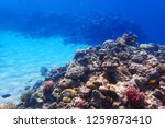 coral reef in egypt as nice... | Shutterstock . vector #1259873410