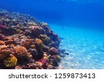 coral reef in egypt as nice... | Shutterstock . vector #1259873413