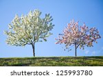 Two flowering trees against the blue sky