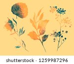 set of flowers  leaves and... | Shutterstock . vector #1259987296