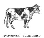 cow rural farm animal engraving ... | Shutterstock .eps vector #1260108850