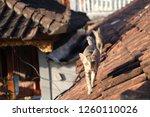 cat in bali | Shutterstock . vector #1260110026