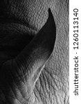 rhino ear close up | Shutterstock . vector #1260113140