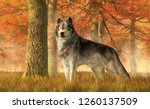 a gray wolf stands in tall... | Shutterstock . vector #1260137509