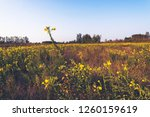uncultivated field in the... | Shutterstock . vector #1260159619