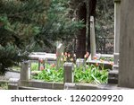 Headstones In A Cemetery With...