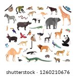 collection of exotic wild... | Shutterstock .eps vector #1260210676