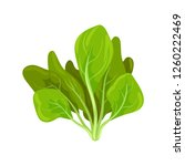 spinach herb  fresh salad... | Shutterstock .eps vector #1260222469
