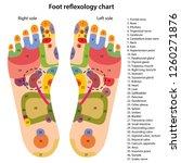 foot reflexology chart with... | Shutterstock .eps vector #1260271876
