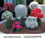 close up of cactus in the pot  | Shutterstock . vector #1260289099