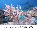 razor fishes with divers... | Shutterstock . vector #126041474