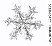 snowflake isolated on white... | Shutterstock .eps vector #1260445900