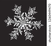 white snowflake isolated on... | Shutterstock .eps vector #1260449470