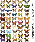 Stock vector collection of colorful butterflies flying in different directions vector 1260455629