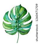 watercolor monstera leaf... | Shutterstock . vector #1260471709