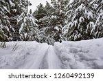 ski trail in snowy forest | Shutterstock . vector #1260492139