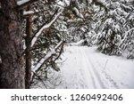 ski trail in snowy forest | Shutterstock . vector #1260492406