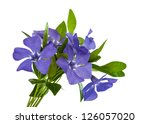 flower periwinkle isolated on... | Shutterstock . vector #126057020