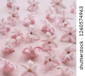 hyacinth pink surprise dutch...   Shutterstock . vector #1260574963