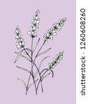 violet flower vector... | Shutterstock .eps vector #1260608260