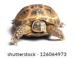 central asian tortoise ... | Shutterstock . vector #126064973