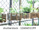 pot of  vegetation green color...   Shutterstock . vector #1260651199