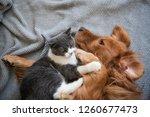 the golden hound and the kitten ... | Shutterstock . vector #1260677473